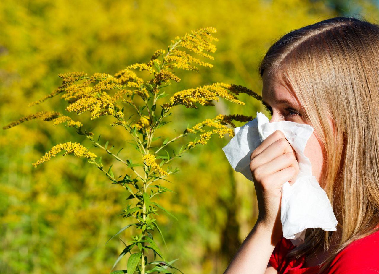 Sezon na alergie sprawdź jak rozpoznać i leczyć - wywiad z dr n. med. Ewą Czernicką-Cierpisz