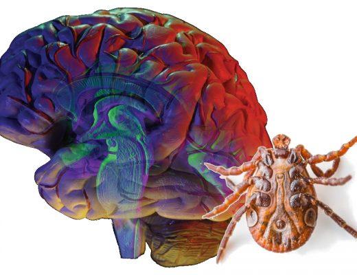Zadbaj o ochronę przed kleszczowym zapaleniem mózgu