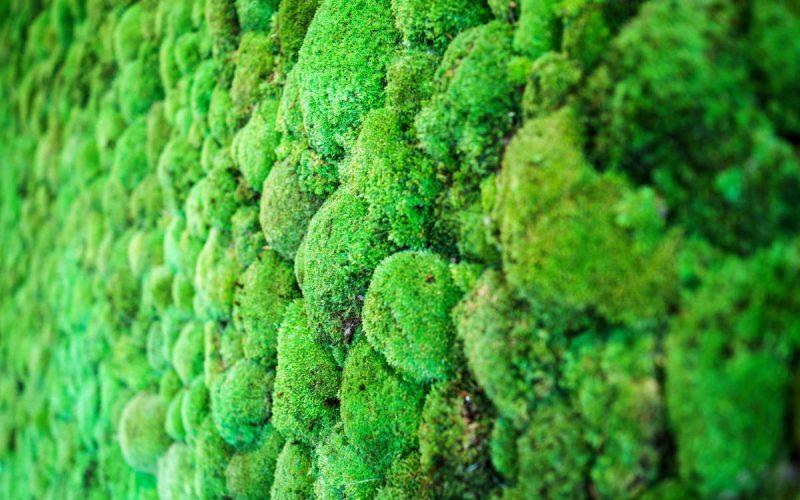 AstraZeneca dla klimatu! Wdrażamy program ZERO CARBON