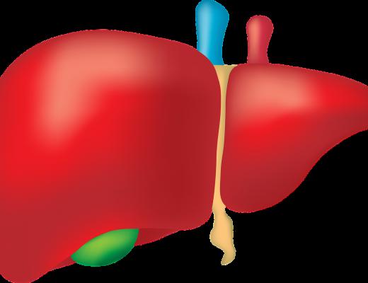 Zbadaj wątrobę – rusza ogólnopolska akcja bezpłatnych badań poziomu stłuszczenia wątroby